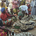 Livestock & Fish Value Chains Conference: Call for Contributions