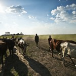 Mainstreaming Livestock Value Chains: Conference