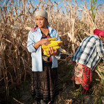 Upcoming: Research Conference on Agricultural Transformation and Food Security in Central Asia