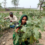 How much food do women produce?