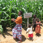 Evaluating potential for conservation agriculture in Ethiopia, Kenya, and Malawi