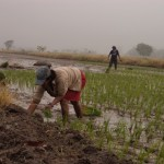 Are women rice farmers in Latin America?