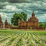 Fields of Bagan
