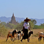 Strengthening Myanmar's agricultural policy system through communications and advocacy