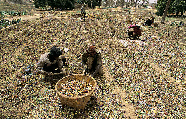 Agricultural science can speed job creation for youth in Africa South of the Sahara