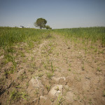 Economics of land degradation and improvement