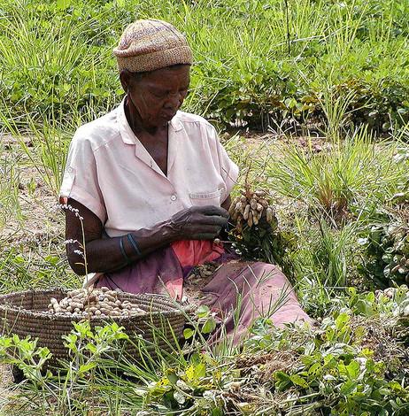 Women's Crop blog featured image