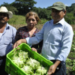 Business models to benefit women and men farmers: LINK methodology with gender lens