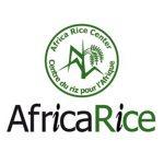 vimeo-africarice_400x400
