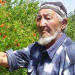 Increasing the profile of crop diversity in agricultural production and policies in Uzbekistan