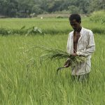 Index insurance as an instrument for managing risk and modernizing agricultural production