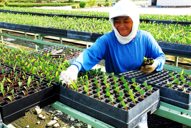 Gender Dynamics in Seed Systems: CGIAR Collaborative Platform for Gender Research announces results of the call for proposals