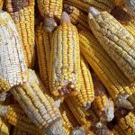The reality of food losses: A new measurement methodology