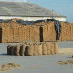 Webinar: Measuring food losses: a new methodology
