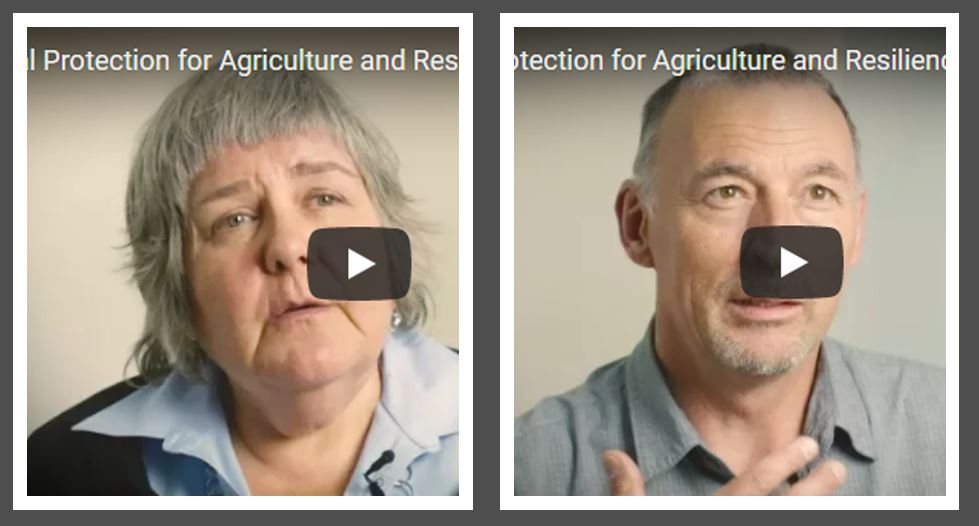 Why is social protection important for agriculture and resilience? Watch our colleagues explain! (Parts 3-4, Sheri Arnott, Bart Minten)