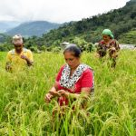 """Feminization of agriculture"" call for proposals: Five projects selected"