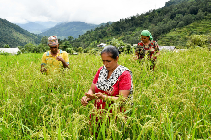"""""""Feminization of agriculture"""" call for proposals: Five projects selected"""