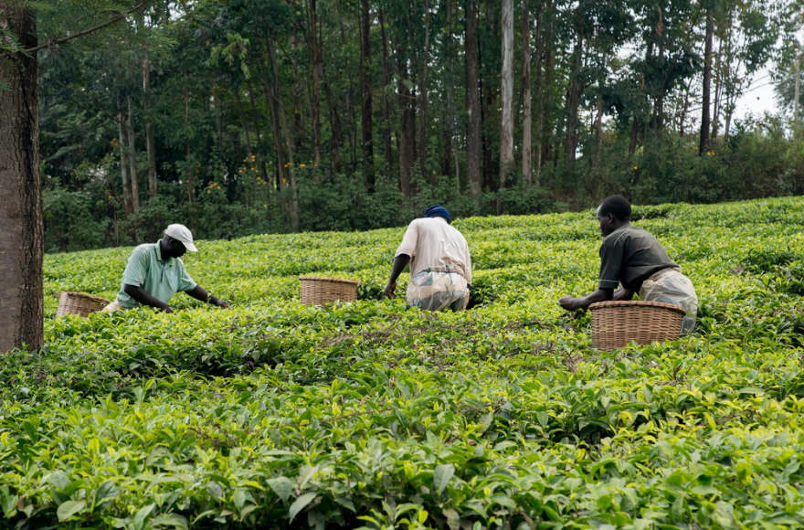 In Africa, more not fewer people will work in agriculture