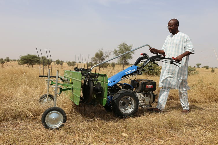 Medium-scale farms are on the rise in Africa. Why this is good news