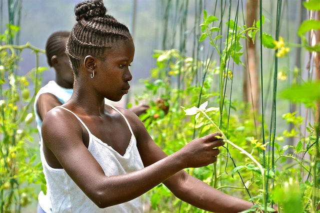 Webinar: Climate resilience and job prospects for young people in agriculture
