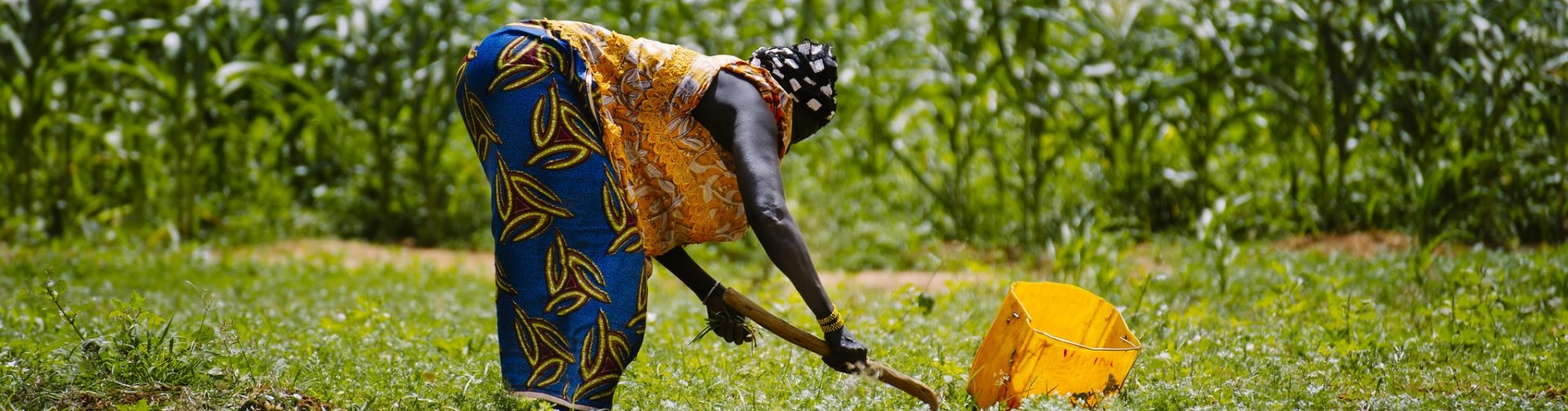 Considering gender in irrigation: Technology adoption for women farmers