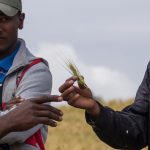 WEBINAR: Transforming Seed Marketing – Lessons from Ethiopia