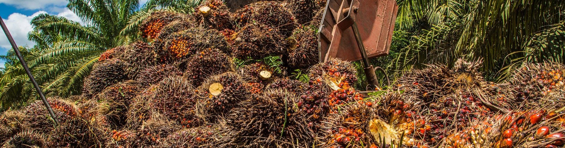 Can boosting yields slow the global palm oil expansion and ease its environmental impacts?