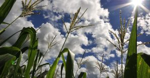 How climate change will impact agricultural productivity in Central America and the Andean Region