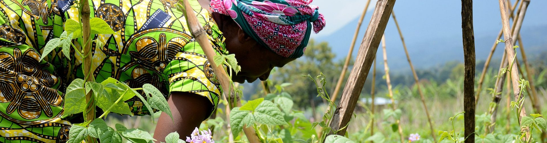 Rethinking poverty eradication and food security through agriculture in Africa