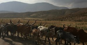 Participatory management strengthens governance, management, and productivity of rangelands