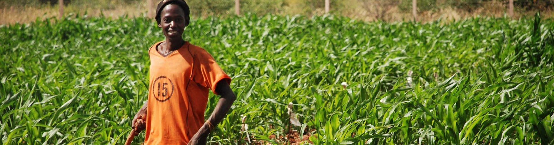 Engaging youth and the private sector in extension and agricultural advisory services (POSTPONED)