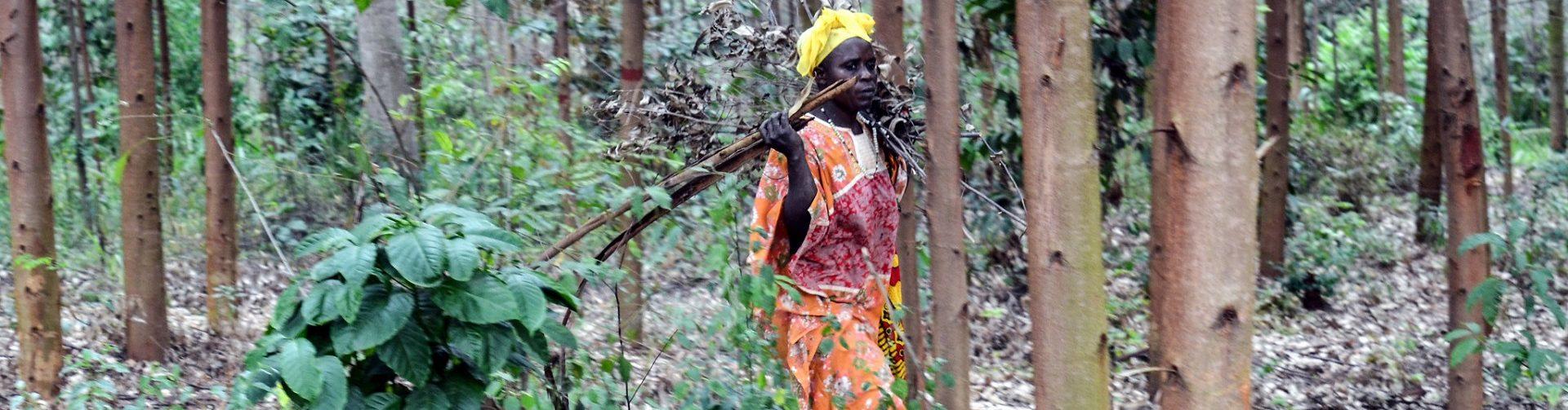 New CIFOR briefs analyze progress of forest tenure reforms in Uganda and Kenya