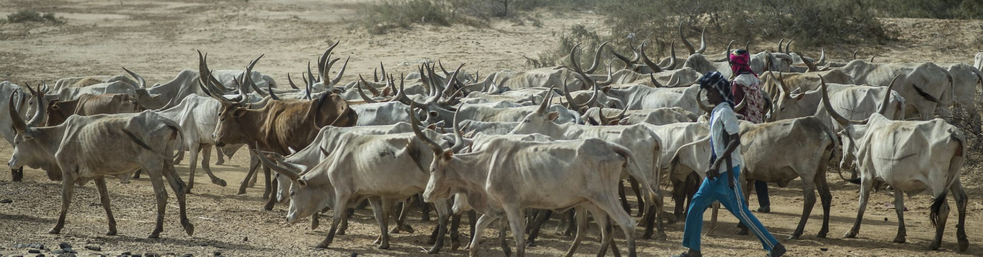 New IFAD/CGIAR note on how to prevent land use conflicts in pastoral areas