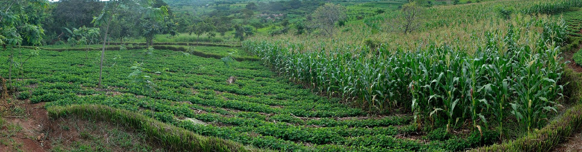 Exploring farmer adoption of conservation agriculture using a lab-in-the-field approach
