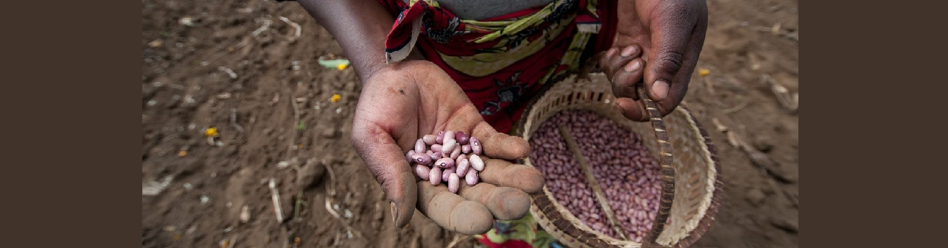 Inclusive seed delivery: Moving from gender diagnoses to testing solutions
