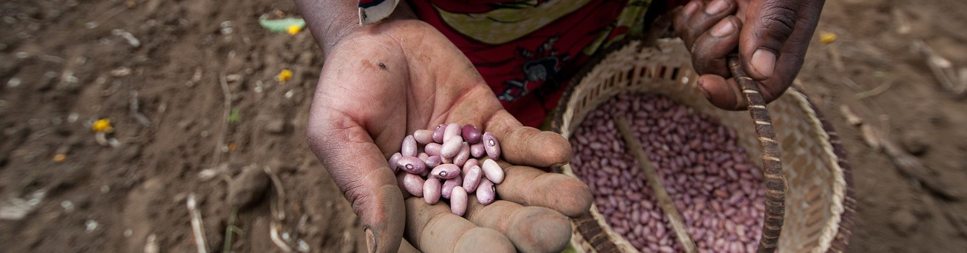 The CGIAR Community of Excellence for Seed Systems Development