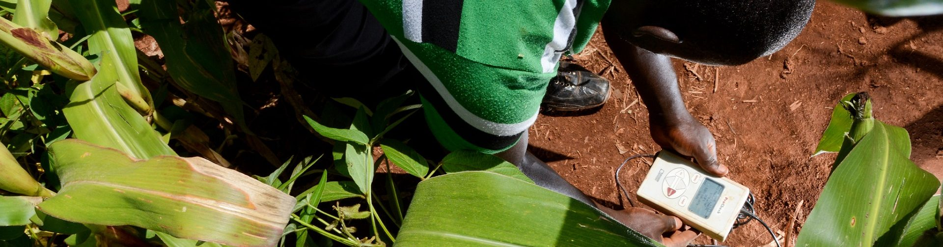 How to encourage farmers to adopt sustainable agriculture