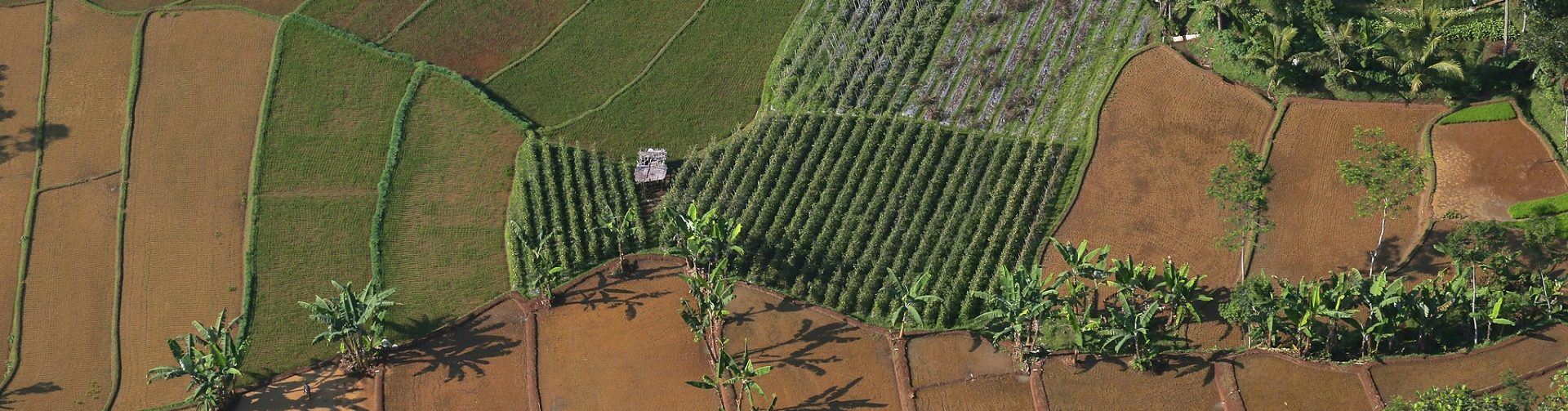 Achieving sustainable agricultural practices: From incentives to adoption and outcomes