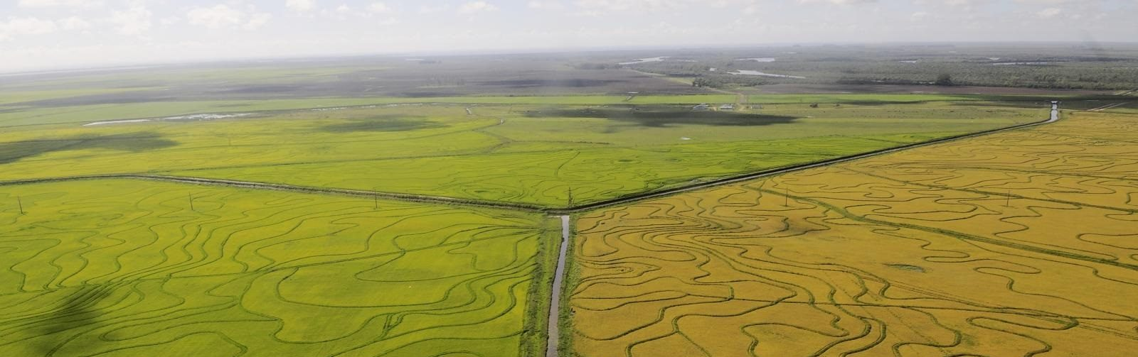 On foresight and trade-off analysis for agriculture and food systems