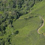 Securing tenure rights for forest-dependent communities: A global comparative study