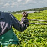 Beyond agriculture: Measuring agri-food system GDP and employment