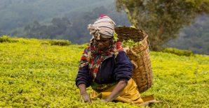 Beyond ownership: Measuring land rights