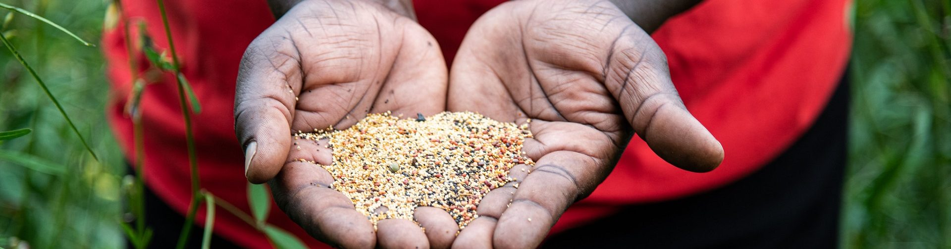 A new model for inclusive seed delivery: Lessons from a pilot in Kenya